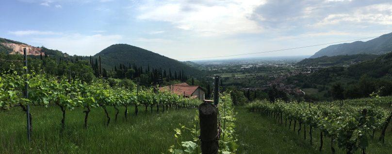 Una terra fatta di marmo e di vino